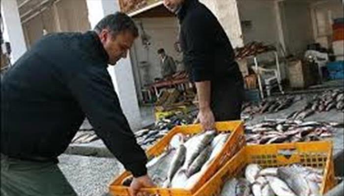 بازار ماهی بعثت تهران