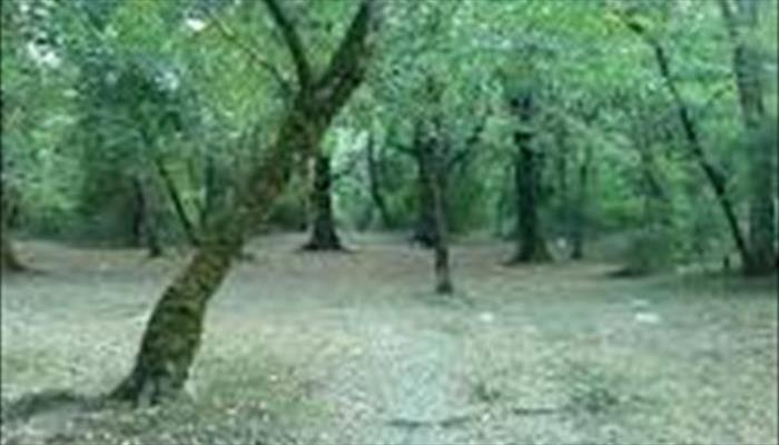 پارك جنگلي صفرا بسته گيلان
