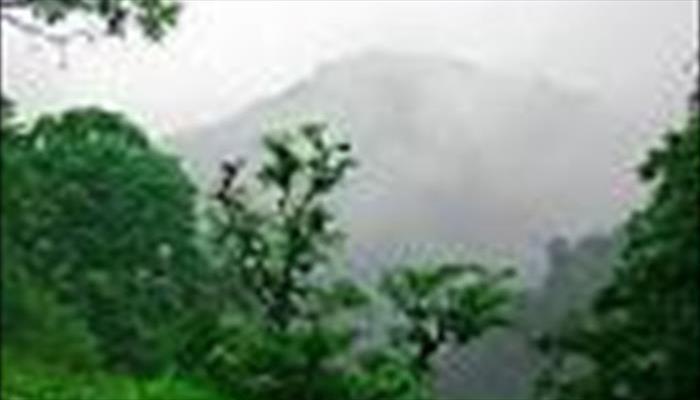 جنگل دالخاني