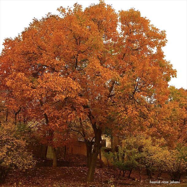 پاییز شهمیرزاد