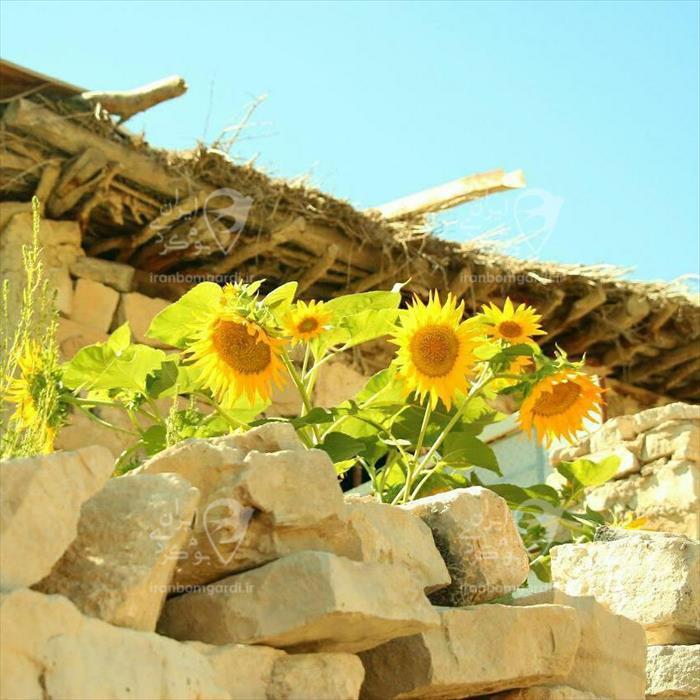 نمای حیاط در اقامتگاه بوم کلبه کوهسار