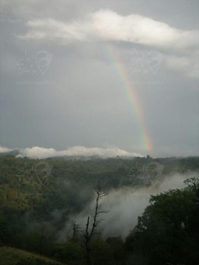 نمای چشم نواز از جنگلهای منطقه هزار جریب