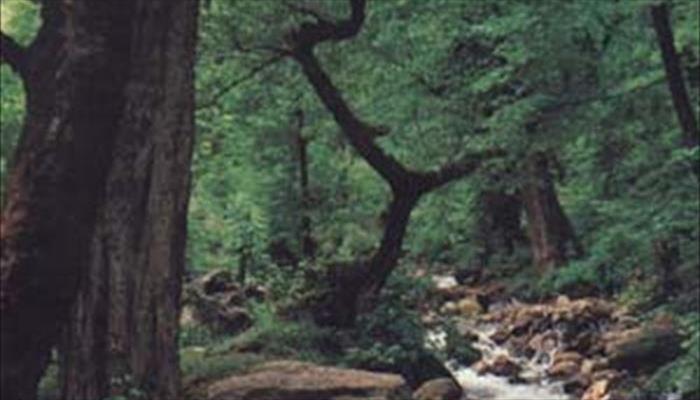 پارک جنگلي سراوان رشت