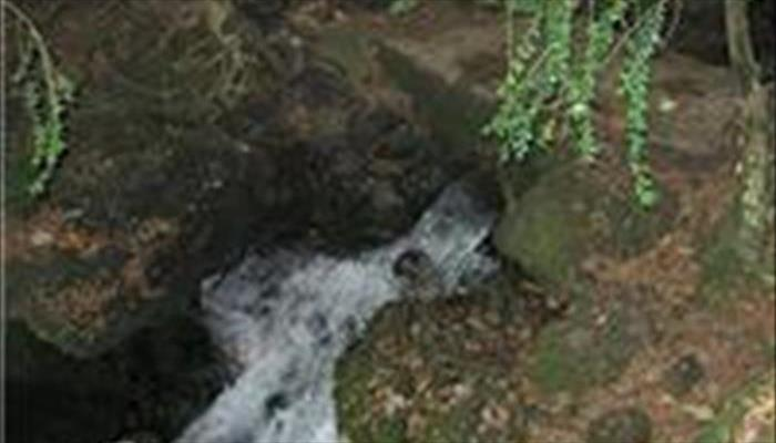 چشمه فکجور دمکش رودسر