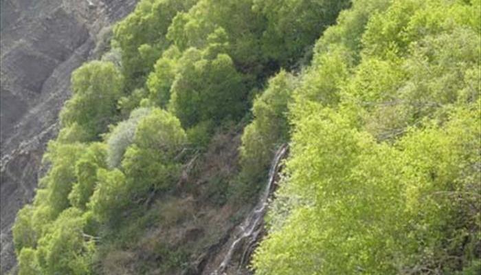 آبشار جنگلک