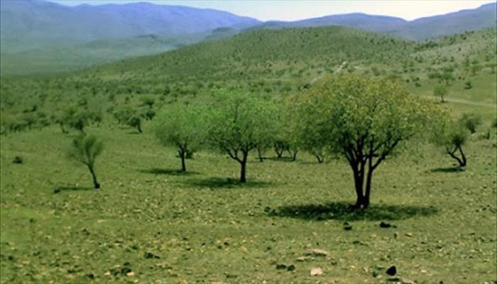 جنگل بناب