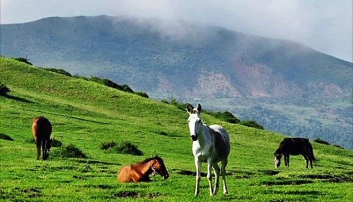 منطقه شکار ممنوع ديلمان درفک
